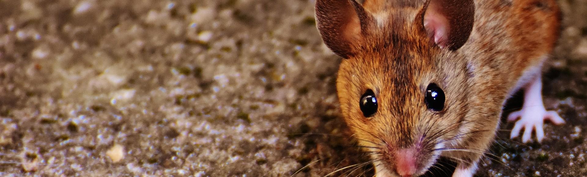 ...die Maus        ...die EINZIGE echte Alternative!