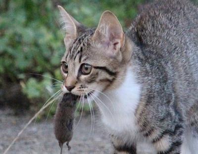 Katz und Maus: eine einzigartige Beziehung