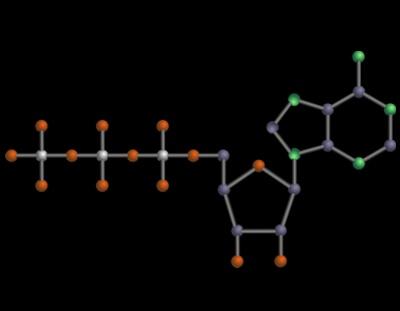 Reine Geschmacksache: im Übermaß schädliche wasserlösliche Phosphate und Glutamat