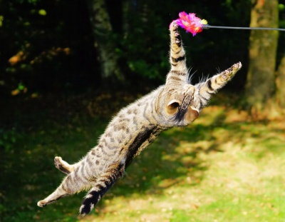 CatsMouse-Gutes-Leben-Konzept